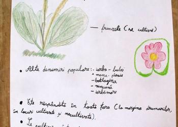 caravana-mestesugurilor-plante-medicinale-5